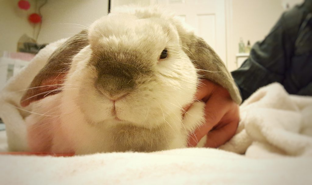 Barbara the rabbit