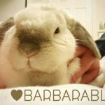 A letter to Santa from Barbara Rabbit #barbarablogs