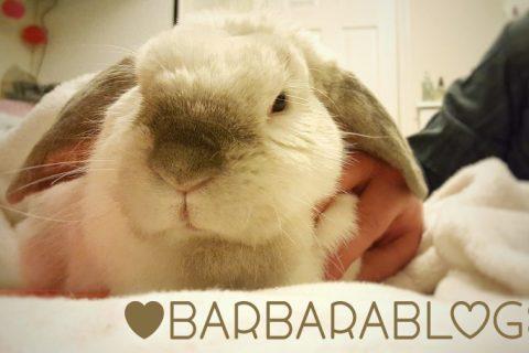 Barbara Rabbit