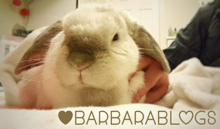 Barbara Rabbit