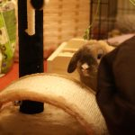 So you're thinking of getting a house rabbit?