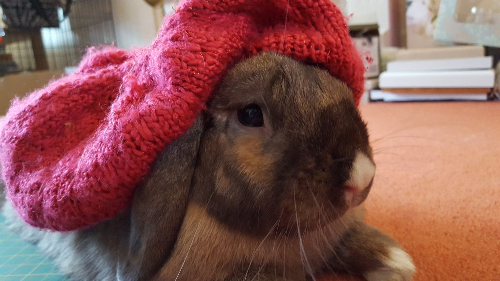 Gingee the rabbit in a hat
