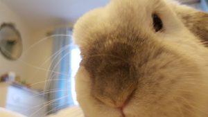 Barbara close up