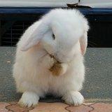 adopting rabbits: Ned