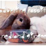 Adopting rabbits: Ned and Gingee
