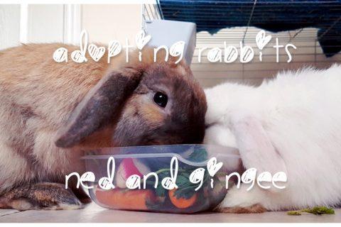 adopting rabbits - gotcha day