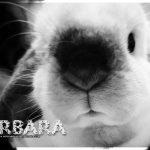 Barbara the rescue rabbit
