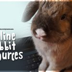 Online rabbit resources - my recommendations