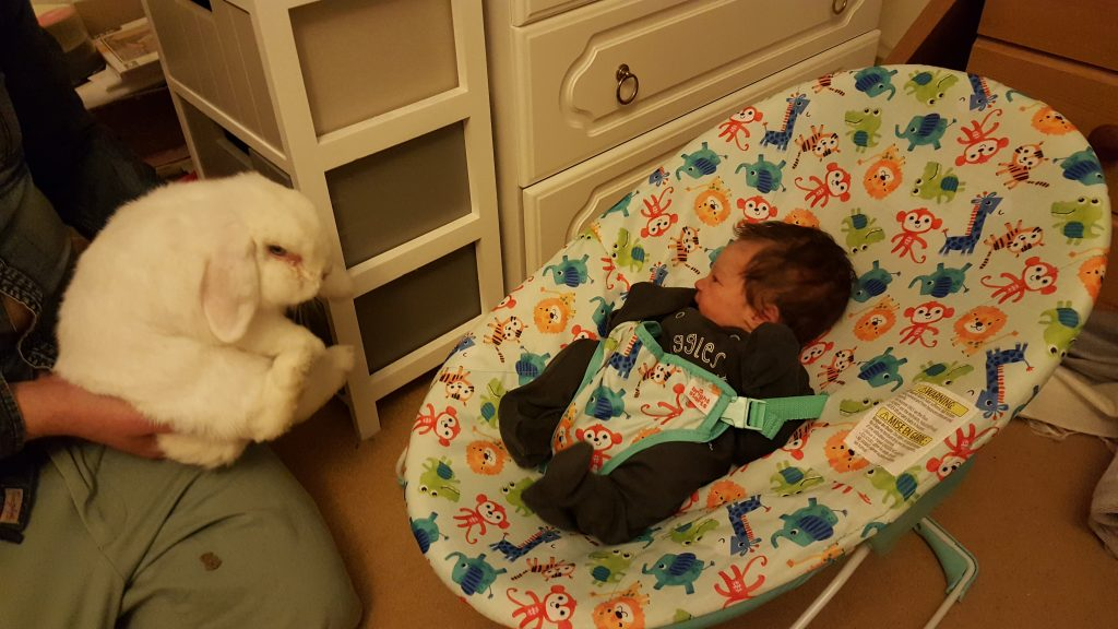 Ned the rabbit with the new baby