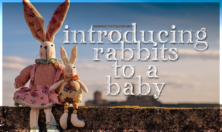 introducing rabbits to a baby