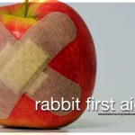 Rabbit first aid kit - what's in there?
